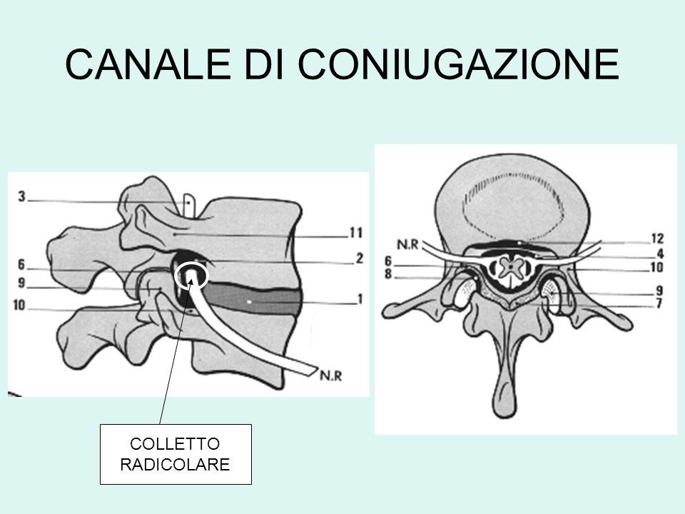 CANALE DI CONIUGAZIONE COLLETTO RADICOLARE