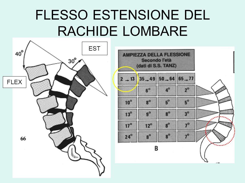 FLESSO ESTENSIONE DEL RACHIDE LOMBARE FLEX EST
