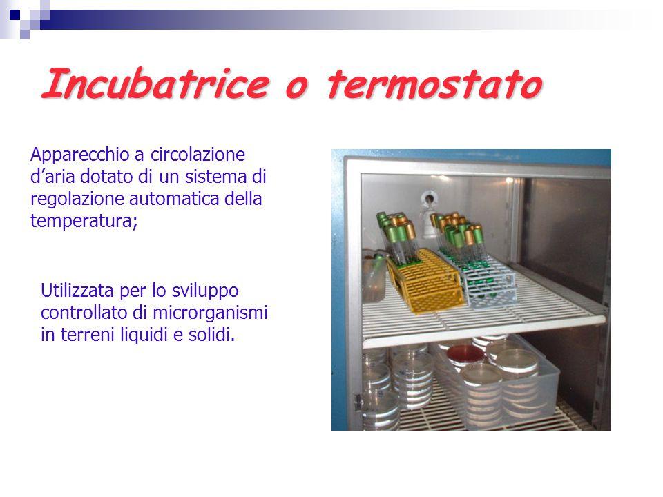 Incubatrice o termostato Apparecchio a circolazione d'aria dotato di un sistema di regolazione automatica della temperatura; Utilizzata per lo svilupp