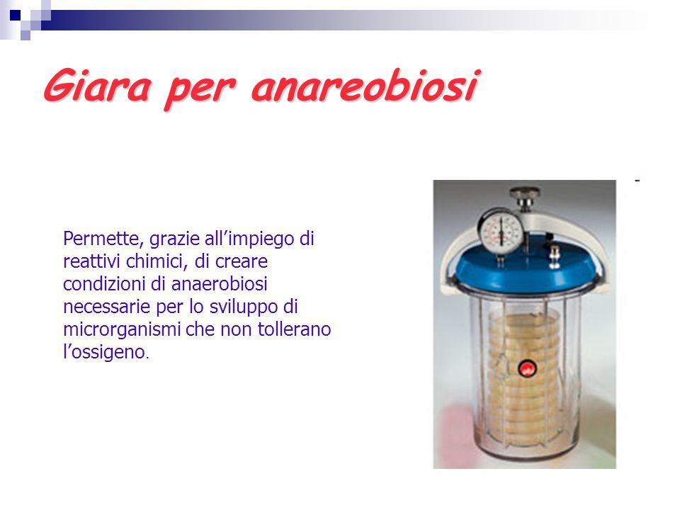 Giara per anareobiosi Permette, grazie all'impiego di reattivi chimici, di creare condizioni di anaerobiosi necessarie per lo sviluppo di microrganism