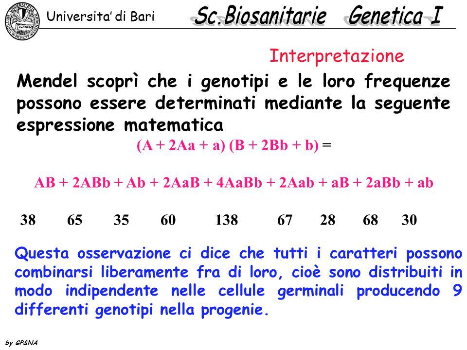 Mendel scoprì che i genotipi e le loro frequenze possono essere determinati mediante la seguente espressione matematica (A + 2Aa + a) (B + 2Bb + b) = AB + 2ABb + Ab + 2AaB + 4AaBb + 2Aab + aB + 2aBb + ab 38 65 35 60 138 67 28 68 30 Questa osservazione ci dice che tutti i caratteri possono combinarsi liberamente fra di loro, cioè sono distribuiti in modo indipendente nelle cellule germinali producendo 9 differenti genotipi nella progenie.