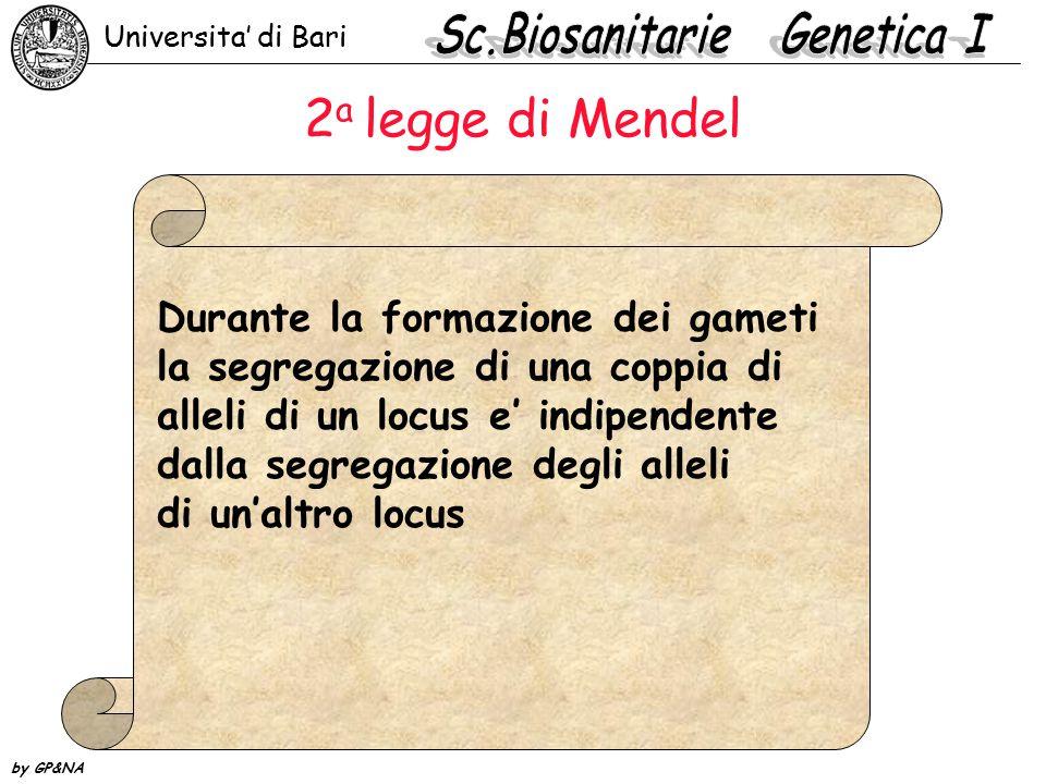 2 a legge di Mendel Durante la formazione dei gameti la segregazione di una coppia di alleli di un locus e' indipendente dalla segregazione degli alleli di un'altro locus Universita' di Bari by GP&NA