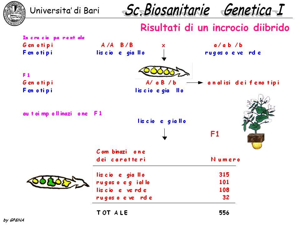 Risultati di un incrocio diibrido F1 Universita' di Bari by GP&NA