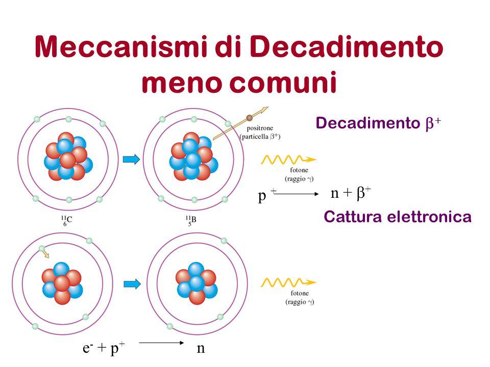 Meccanismi di Decadimento meno comuni Cattura elettronica Decadimento   p + n +  + e - + p + n