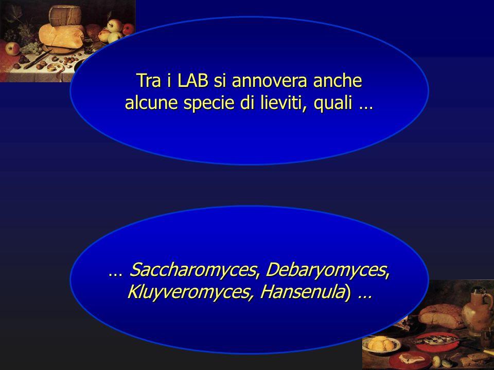 Tra i LAB si annovera anche alcune specie di lieviti, quali … … Saccharomyces, Debaryomyces, Kluyveromyces, Hansenula) …