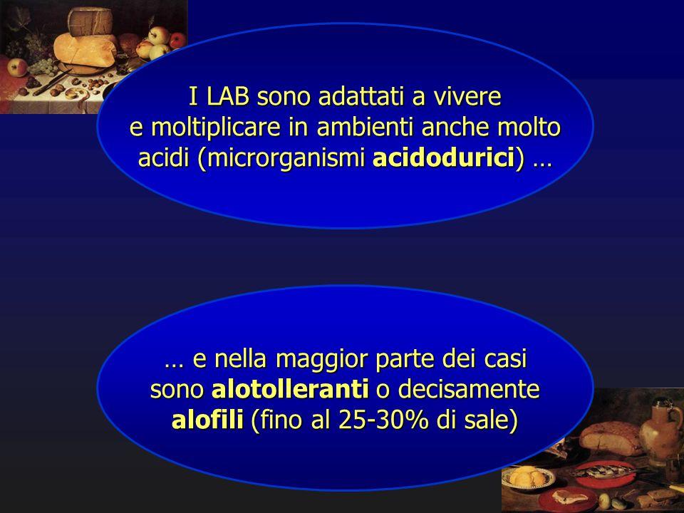 I LAB sono adattati a vivere e moltiplicare in ambienti anche molto acidi (microrganismi acidodurici) … … e nella maggior parte dei casi sono alotolle