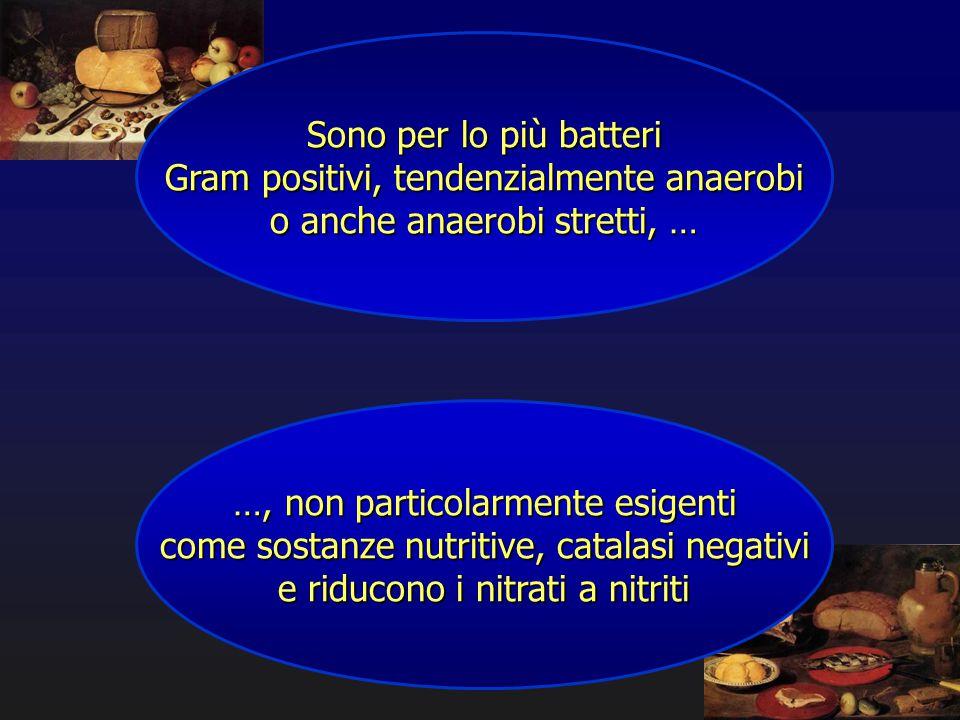 Sono per lo più batteri Gram positivi, tendenzialmente anaerobi o anche anaerobi stretti, … …, non particolarmente esigenti come sostanze nutritive, c