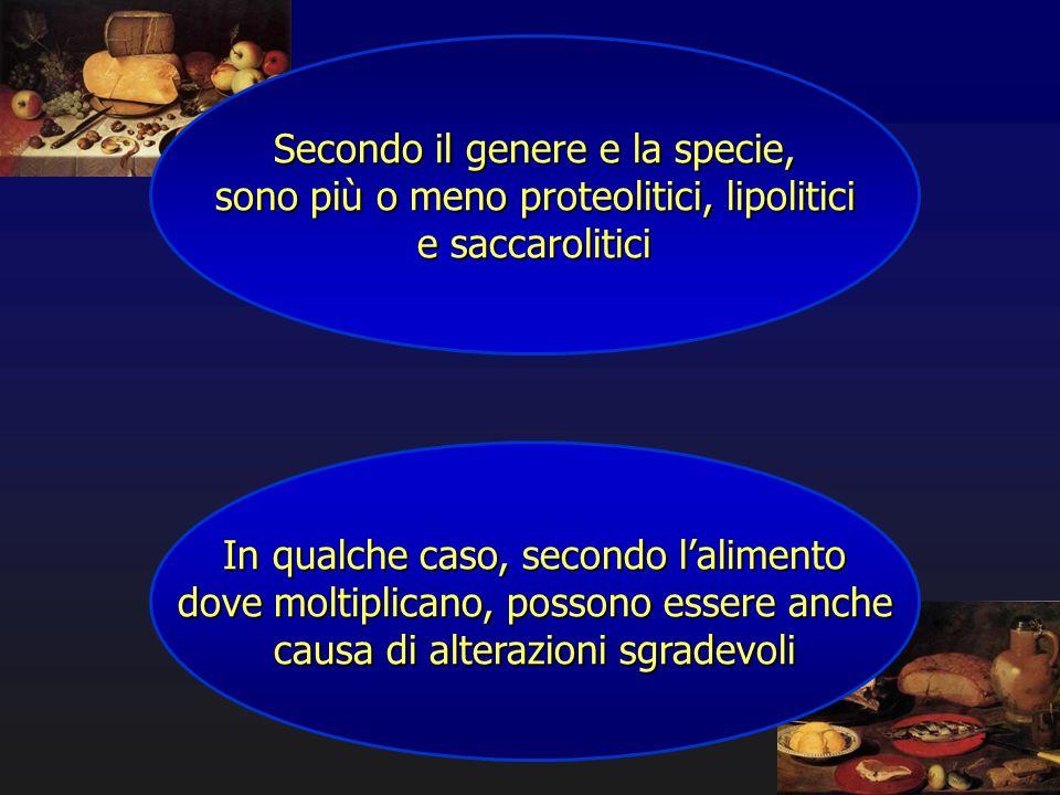 Secondo il genere e la specie, sono più o meno proteolitici, lipolitici e saccarolitici In qualche caso, secondo l'alimento dove moltiplicano, possono