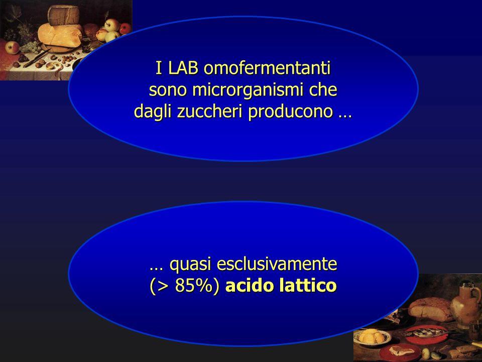 I LAB omofermentanti sono microrganismi che dagli zuccheri producono … … quasi esclusivamente (> 85%) acido lattico