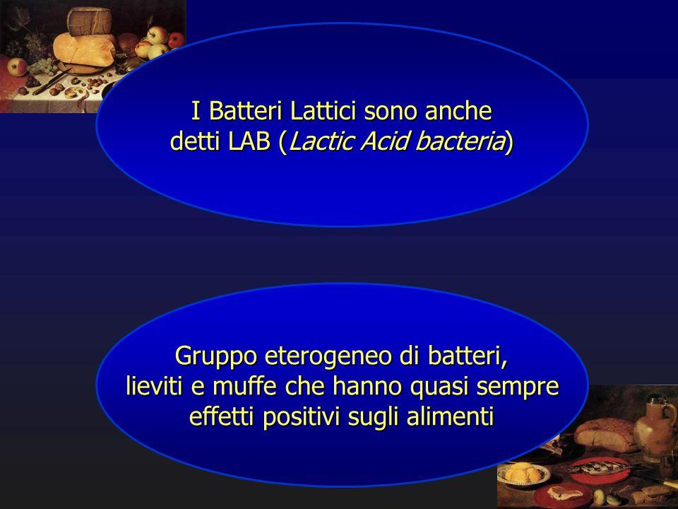 I Batteri Lattici sono anche detti LAB (Lactic Acid bacteria) Gruppo eterogeneo di batteri, lieviti e muffe che hanno quasi sempre effetti positivi su