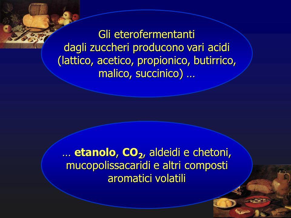Gli eterofermentanti dagli zuccheri producono vari acidi (lattico, acetico, propionico, butirrico, malico, succinico) … … etanolo, CO 2, aldeidi e che