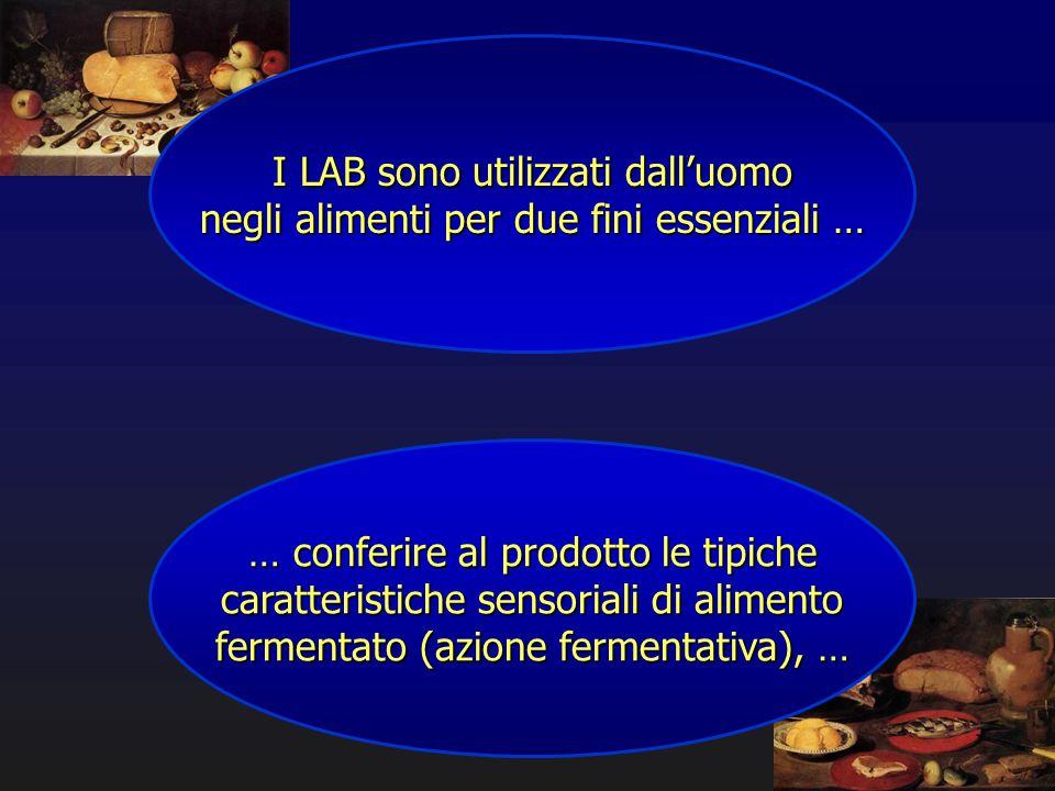 I LAB sono utilizzati dall'uomo negli alimenti per due fini essenziali … … conferire al prodotto le tipiche caratteristiche sensoriali di alimento fer