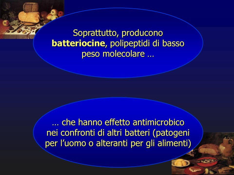 Soprattutto, producono batteriocine, polipeptidi di basso peso molecolare … … che hanno effetto antimicrobico nei confronti di altri batteri (patogeni