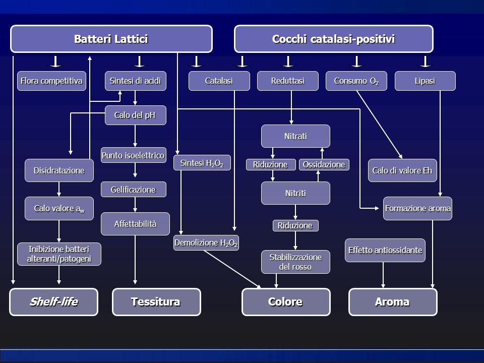 Batteri Lattici Cocchi catalasi-positivi Shelf-lifeTessituraColoreAroma Flora competitiva Sintesi di acidi CatalasiReduttasi Consumo O 2 Lipasi Calo d