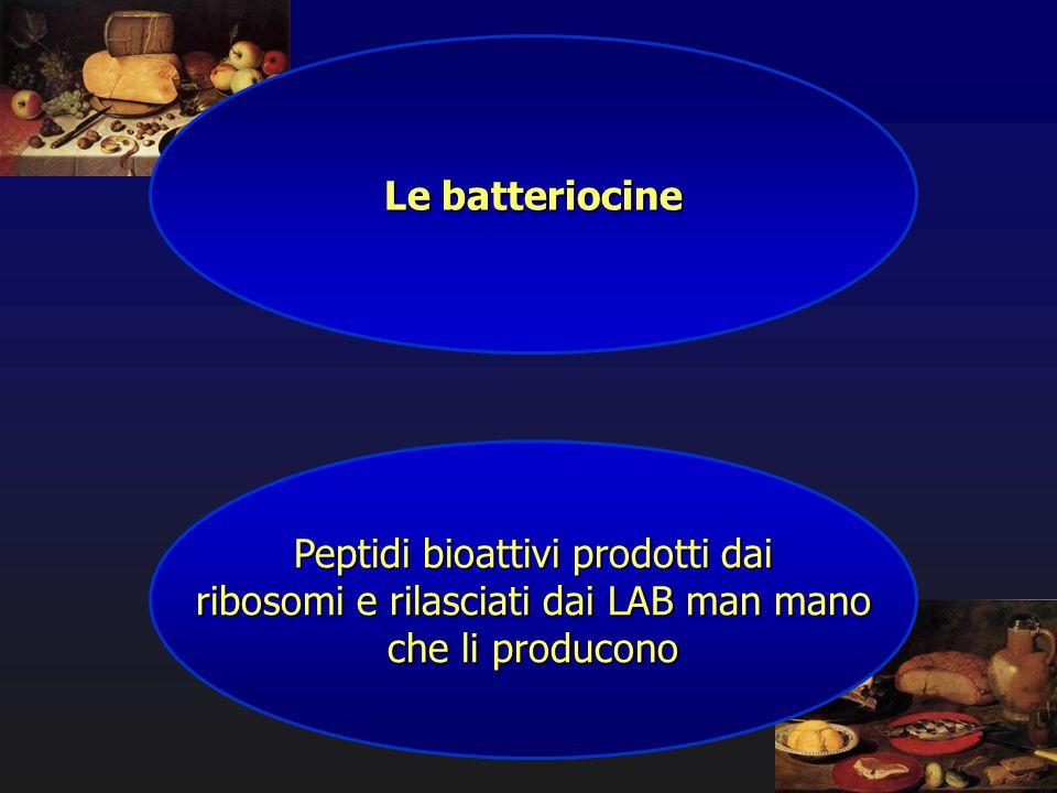 Le batteriocine Peptidi bioattivi prodotti dai ribosomi e rilasciati dai LAB man mano che li producono