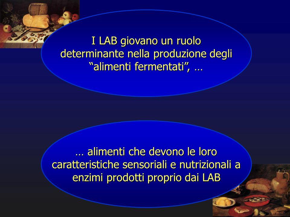 """I LAB giovano un ruolo determinante nella produzione degli """"alimenti fermentati"""", … … alimenti che devono le loro caratteristiche sensoriali e nutrizi"""