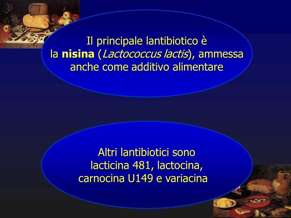 Il principale lantibiotico è la nisina (Lactococcus lactis), ammessa anche come additivo alimentare Altri lantibiotici sono lacticina 481, lactocina,
