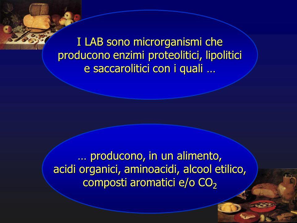 I LAB sono microrganismi che producono enzimi proteolitici, lipolitici e saccarolitici con i quali … … producono, in un alimento, acidi organici, amin