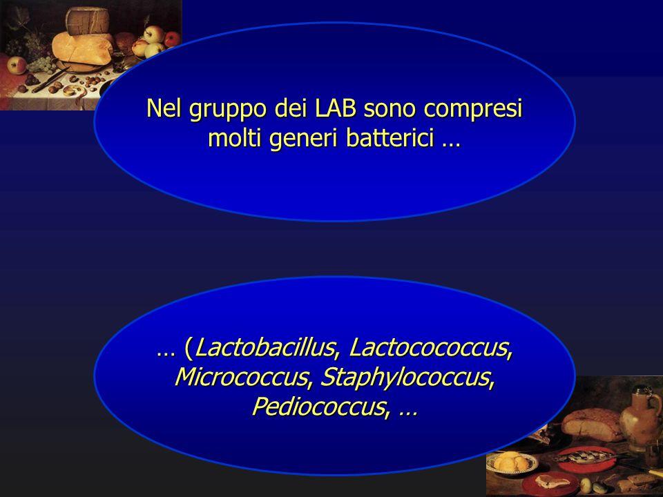 Nel gruppo dei LAB sono compresi molti generi batterici … … (Lactobacillus, Lactocococcus, Micrococcus, Staphylococcus, Pediococcus, …