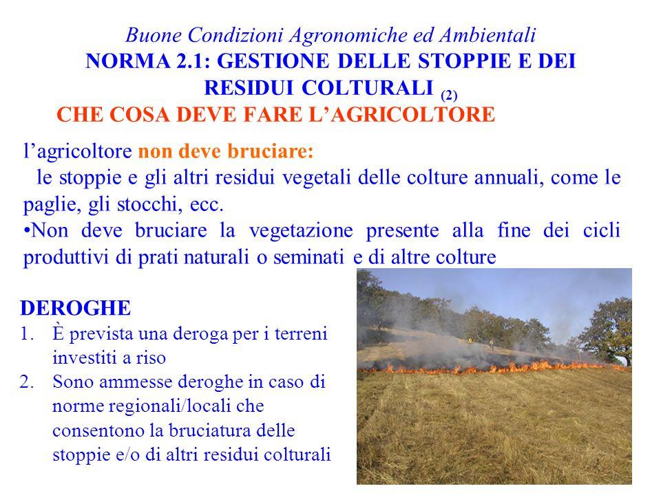 Buone Condizioni Agronomiche ed Ambientali NORMA 2.1: GESTIONE DELLE STOPPIE E DEI RESIDUI COLTURALI (2) CHE COSA DEVE FARE L'AGRICOLTORE l'agricoltor