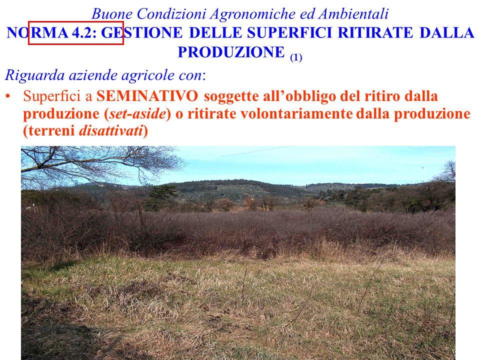 Buone Condizioni Agronomiche ed Ambientali NORMA 4.2: GESTIONE DELLE SUPERFICI RITIRATE DALLA PRODUZIONE (1) Riguarda aziende agricole con: Superfici