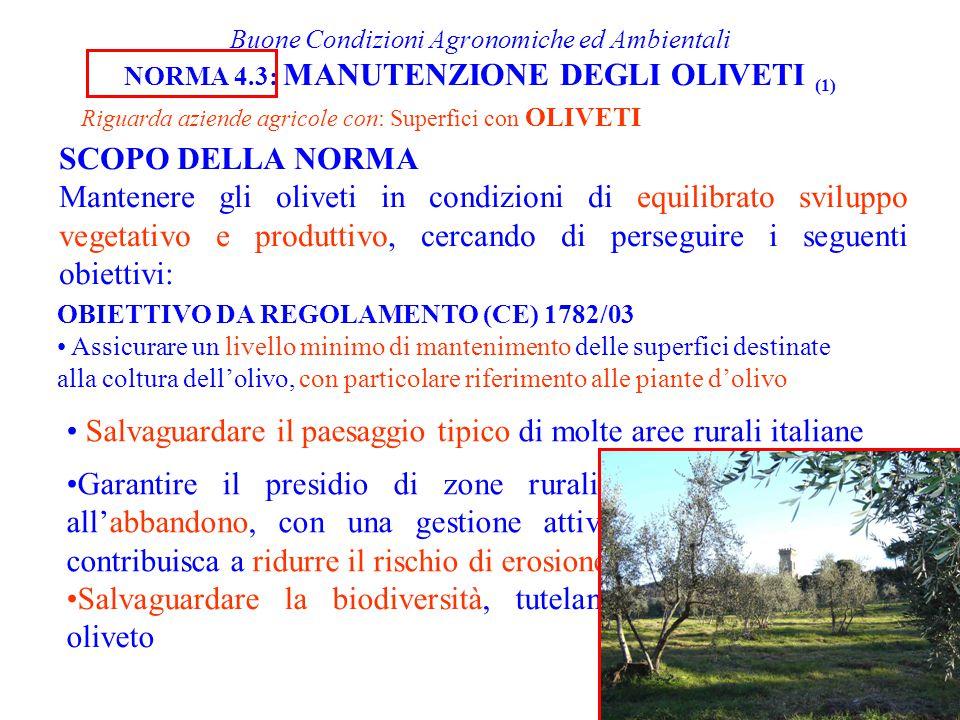 Buone Condizioni Agronomiche ed Ambientali NORMA 4.3: MANUTENZIONE DEGLI OLIVETI (1) Riguarda aziende agricole con: Superfici con OLIVETI OBIETTIVO DA