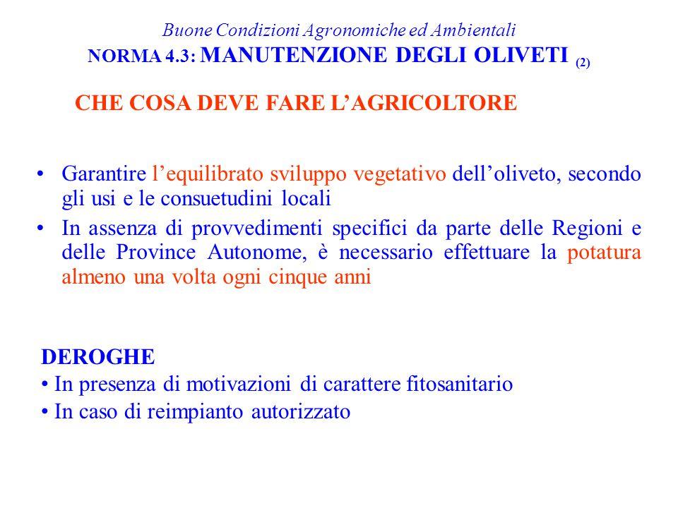 Garantire l'equilibrato sviluppo vegetativo dell'oliveto, secondo gli usi e le consuetudini locali In assenza di provvedimenti specifici da parte dell
