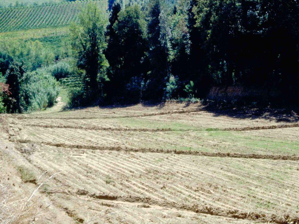 Buone Condizioni Agronomiche ed Ambientali NORMA 1.1: REGIMAZIONE DELLE ACQUE SUPERFICIALI NEI TERRENI IN PENDIO (2) CHE COSA DEVE FARE L'AGRICOLTORE Nei terreni declivi che manifestano fenomeni erosivi (rigagnoli), l'agricoltore deve realizzare solchi acquai temporanei, con andamento trasversale alla massima pendenza e distanti tra loro non più di 80 m.