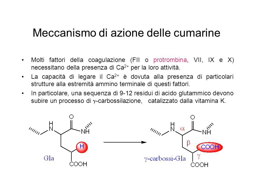 Meccanismo di azione delle cumarine Molti fattori della coagulazione (FII o protrombina, VII, IX e X) necessitano della presenza di Ca 2+ per la loro