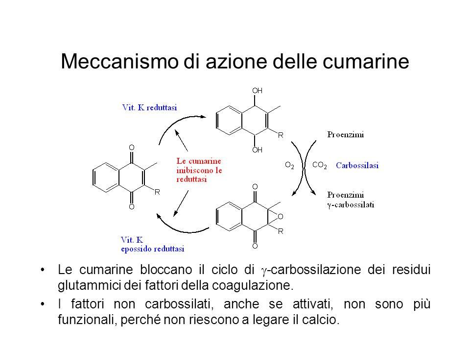 Meccanismo di azione delle cumarine Le cumarine bloccano il ciclo di  -carbossilazione dei residui glutammici dei fattori della coagulazione. I fatto