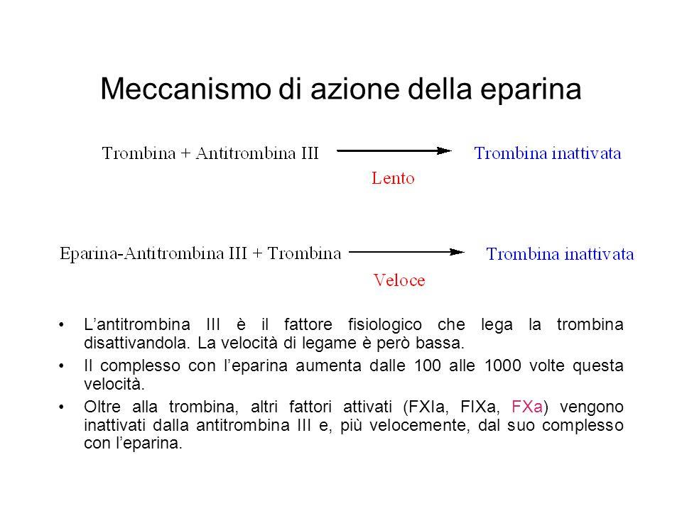 Meccanismo di azione della eparina L'antitrombina III è il fattore fisiologico che lega la trombina disattivandola. La velocità di legame è però bassa