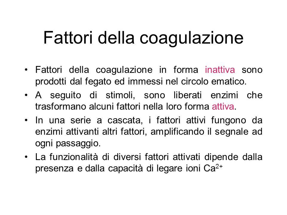 Fattori della coagulazione Fattori della coagulazione in forma inattiva sono prodotti dal fegato ed immessi nel circolo ematico. A seguito di stimoli,