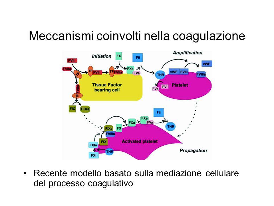 Meccanismi coinvolti nella coagulazione Recente modello basato sulla mediazione cellulare del processo coagulativo