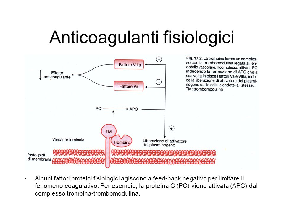 Anticoagulanti fisiologici Alcuni fattori proteici fisiologici agiscono a feed-back negativo per limitare il fenomeno coagulativo. Per esempio, la pro