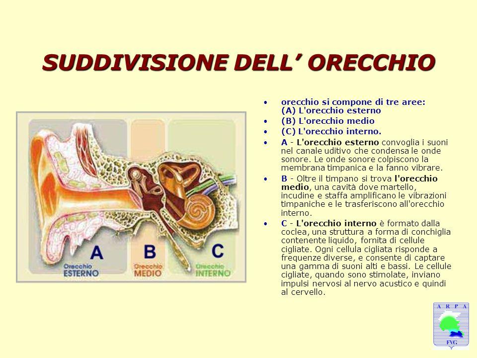SUDDIVISIONE DELL' ORECCHIO orecchio si compone di tre aree: (A) L'orecchio esterno (B) L'orecchio medio (C) L'orecchio interno. A - L'orecchio estern