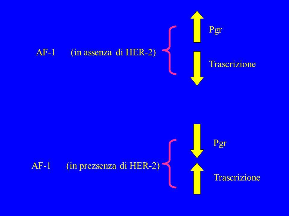AF-1 (in assenza di HER-2) Pgr Trascrizione AF-1 (in prezsenza di HER-2) Pgr Trascrizione