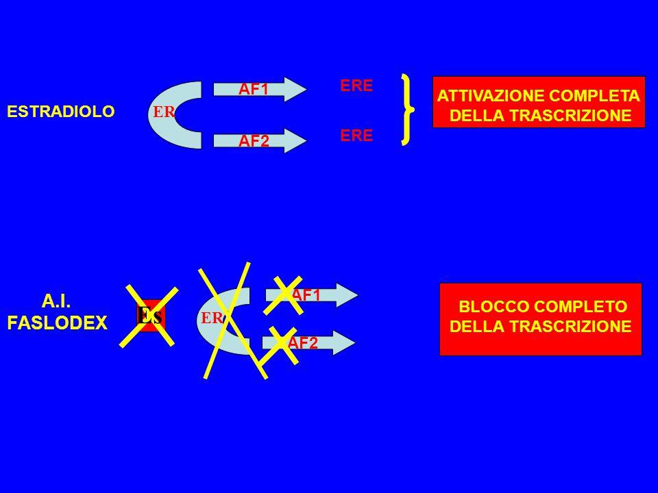 ER AF1 AF2 ESTRADIOLO ERE ATTIVAZIONE COMPLETA DELLA TRASCRIZIONE ER AF1 AF2 BLOCCO COMPLETO DELLA TRASCRIZIONE Es A.I. FASLODEX