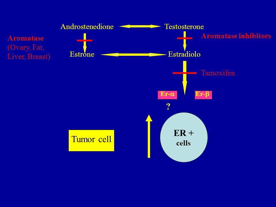 Androstenedione Testosterone Estrone Estradiolo ER + cells Aromatase inhibitors Aromatase (Ovary, Fat, Liver, Breast) Tamoxifen Er-  Er-