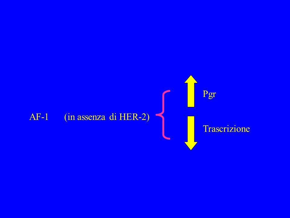 ER AF1 AF2 ESTRADIOLO ERE ATTIVAZIONE COMPLETA DELLA TRASCRIZIONE ER TAMOXIFEN AF1 AF2 EREATTIVAZIONE PARZIALE DELLA TRASCRIZIONE (solo AF1) Meccanismo d'azione di Estradiolo e Tam a confronto Agonista Antagonista