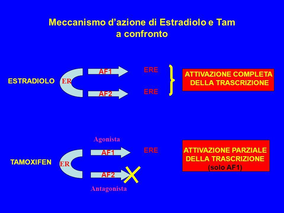 ER AF1 AF2 ESTRADIOLO ERE ATTIVAZIONE COMPLETA DELLA TRASCRIZIONE ER TAMOXIFEN AF1 AF2 EREATTIVAZIONE PARZIALE DELLA TRASCRIZIONE (solo AF1) Meccanism