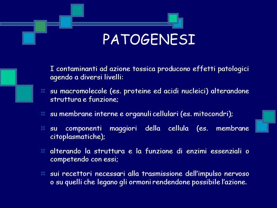 PATOGENESI I contaminanti ad azione tossica producono effetti patologici agendo a diversi livelli:  su macromolecole (es. proteine ed acidi nucleici)