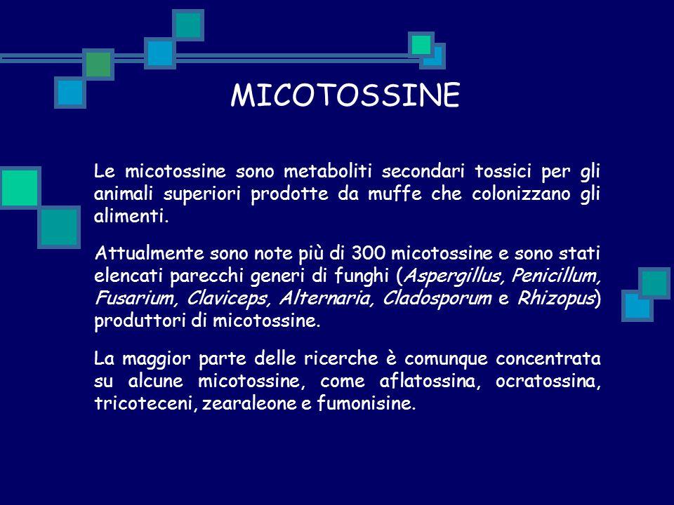 MICOTOSSINE Le micotossine sono metaboliti secondari tossici per gli animali superiori prodotte da muffe che colonizzano gli alimenti. Attualmente son