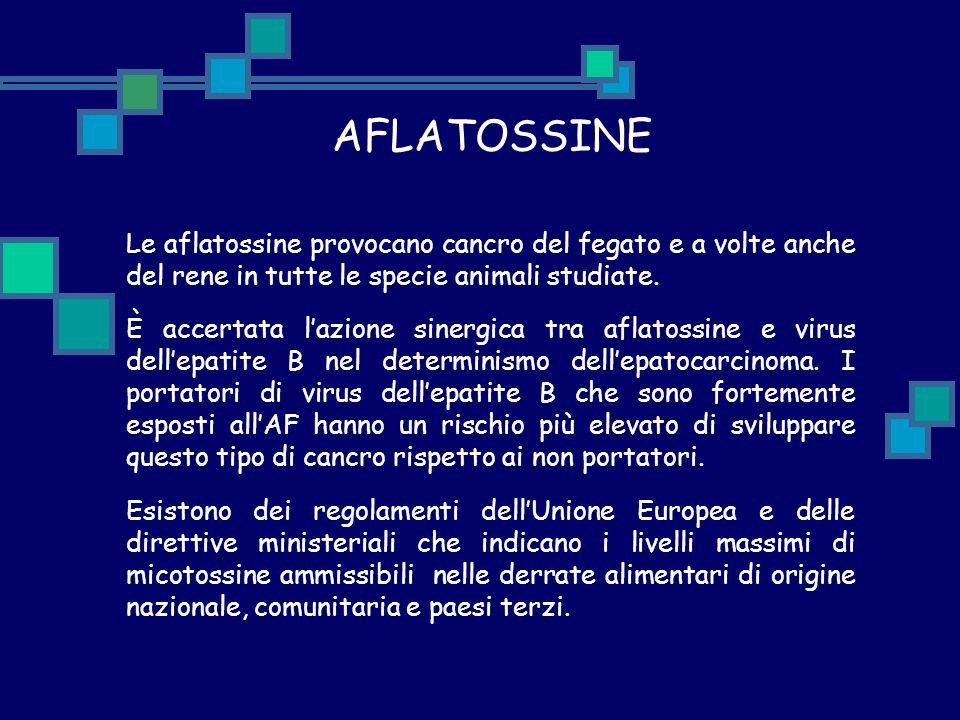 AFLATOSSINE Le aflatossine provocano cancro del fegato e a volte anche del rene in tutte le specie animali studiate. È accertata l'azione sinergica tr