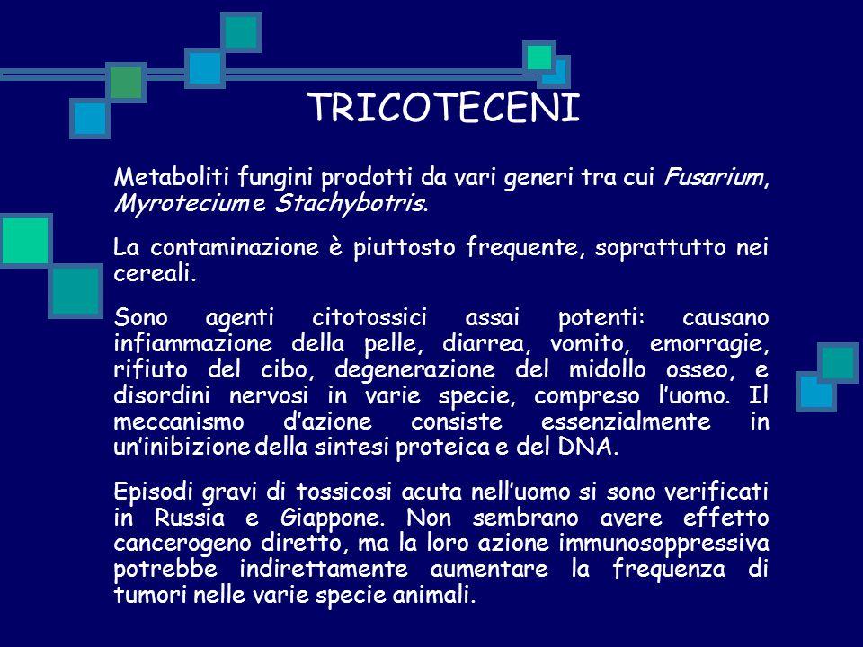 TRICOTECENI Metaboliti fungini prodotti da vari generi tra cui Fusarium, Myrotecium e Stachybotris. La contaminazione è piuttosto frequente, soprattut