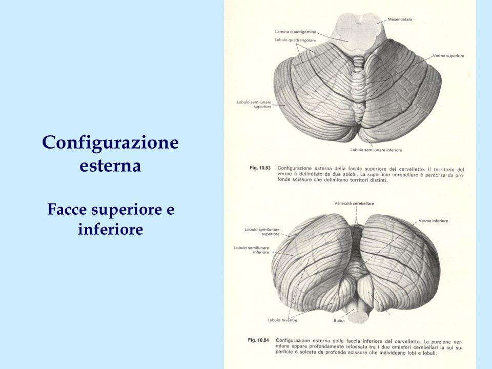 Configurazione esterna Facce superiore e inferiore