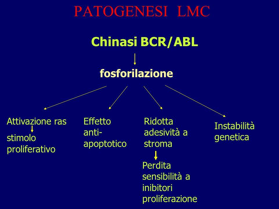 PATOGENESI LMC Chinasi BCR/ABL fosforilazione Attivazione ras stimolo proliferativo Effetto anti- apoptotico Ridotta adesività a stroma Perdita sensib