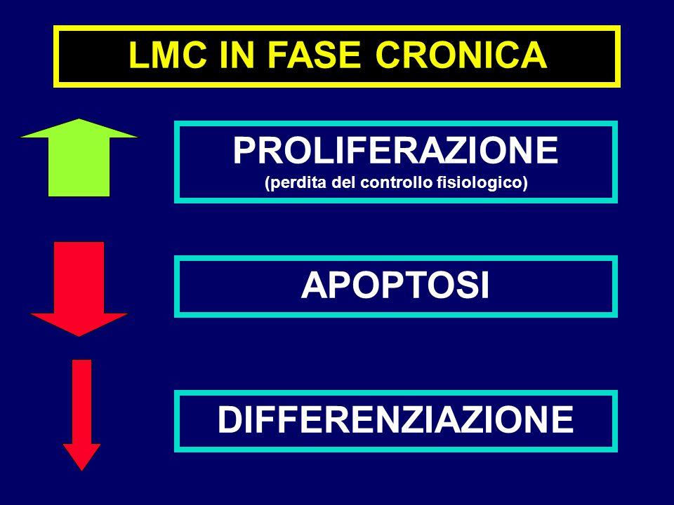 LMC IN FASE CRONICA PROLIFERAZIONE (perdita del controllo fisiologico) APOPTOSI DIFFERENZIAZIONE