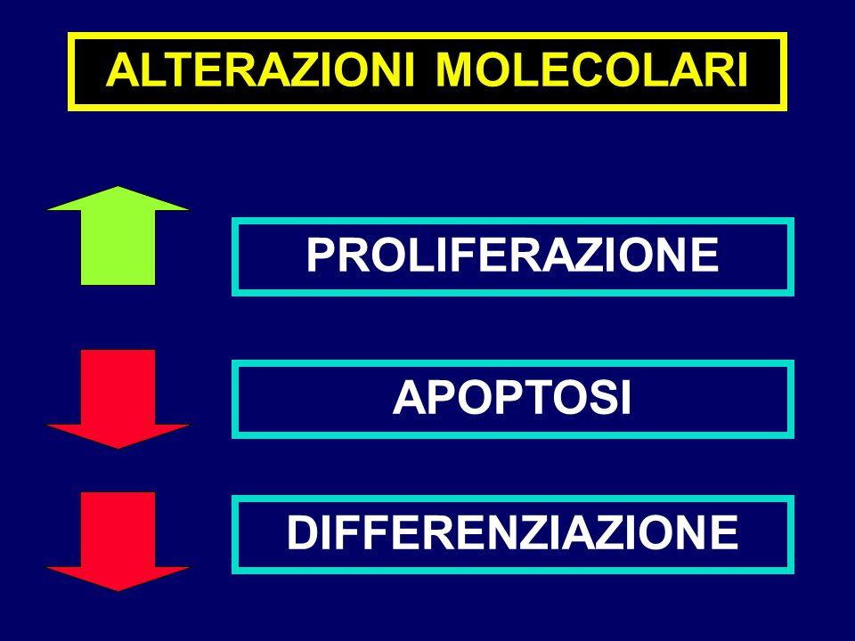 ALTERAZIONI MOLECOLARI PROLIFERAZIONE APOPTOSI DIFFERENZIAZIONE