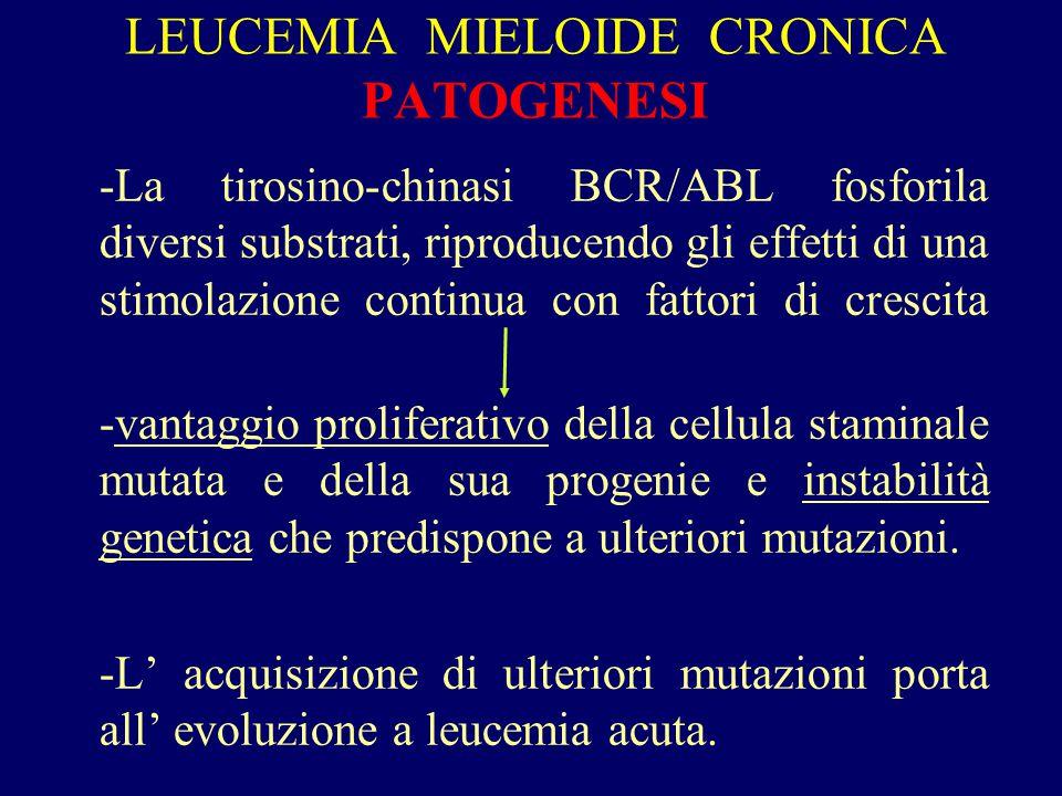 LEUCEMIA MIELOIDE CRONICA PATOGENESI -La tirosino-chinasi BCR/ABL fosforila diversi substrati, riproducendo gli effetti di una stimolazione continua c