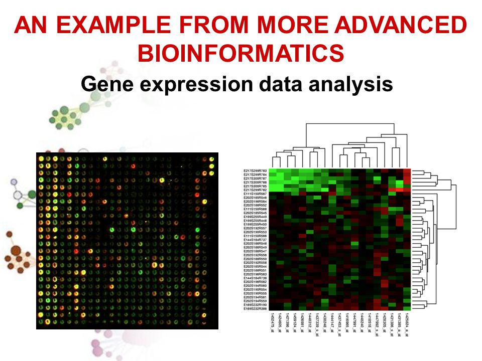 AN EXAMPLE FROM MORE ADVANCED BIOINFORMATICS Gene expression data analysis